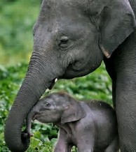 elephant mum and baby